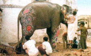 Festa dos elefantes na Índia