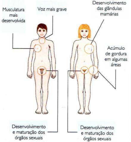 Mudanças durante a puberdade