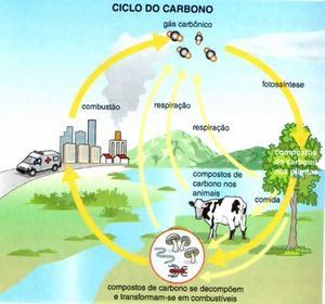 Esquema Ilustrado do ciclo do carbono