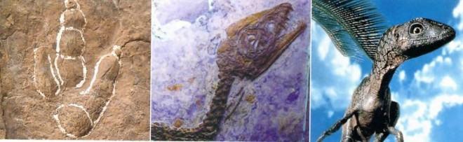 reconstrução do dinossauro Scipionyx