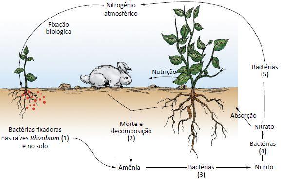 Importância das bactérias.