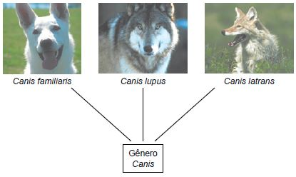 Exemplo de categoria taxonômica.