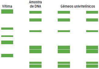 Exemplo 4 de um teste de DNA