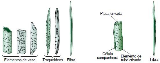 Biologia Página 3 De 14 Cola Da Web