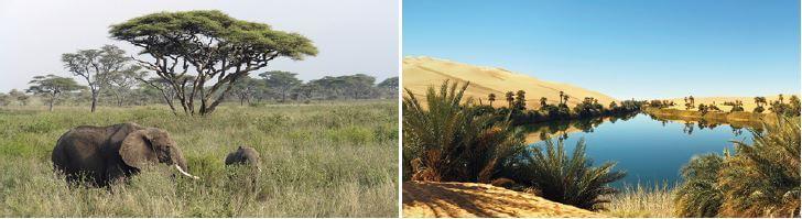 Vegetação do continente africano.