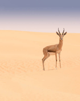 Fauna do deserto.