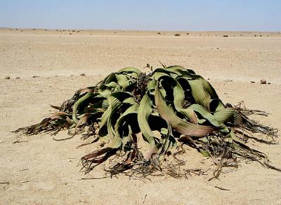 Vegetação do deserto.