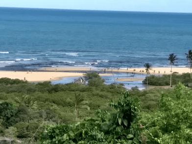 Foto de coqueiral em Trancoso, litoral leste brasileiro.