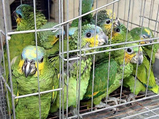 Pássaros trancados em uma gaiola.