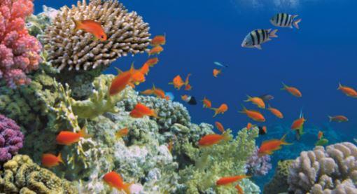 Ecossistemas aquáticos do tipo marinho.