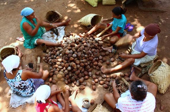 Mulheres quebrando cocos de babaçu.