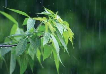 Chuva caindo em uma panta.