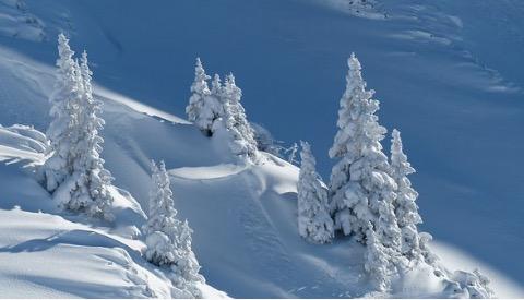Foto de árvores cobertas de neve.