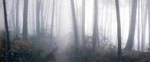 Imagem de névoa em uma floresta.