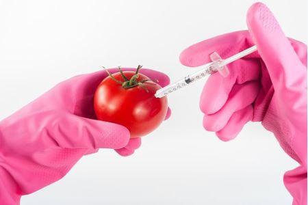 Imagem de uma pessoa aplicando uma injeção de conservantes em um tomate.