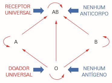 Transfusões possíveis no sistema ABO.