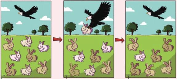 Exemplo de seleção natural