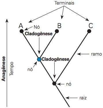 Interpretando um cladograma
