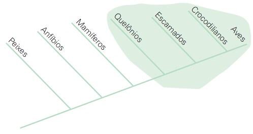 cladograma monofilético