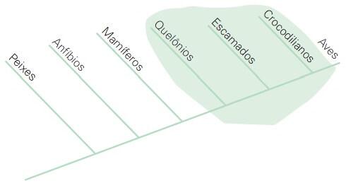 Cladograma de um grupo parafilético.