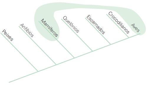 Cladograma de um grupo polifilético.