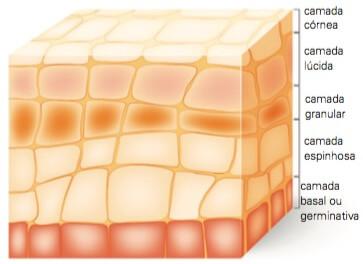 Imagem de uma pele humana evidenciando as camadas da epiderme