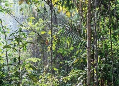 Floresta ombrófila aberta.