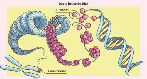 Cromossomos.