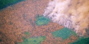 Desmatamento na Amazônia e Suas Consequências