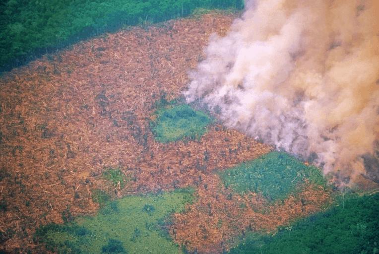 Foto de uma queimada na Floresta Amazônica.