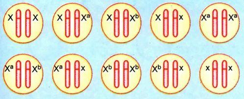 Série de alelos múltiplos