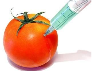 Ilustração de um tomate se tornando trangênico através de uma seringa.