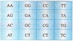 Aminoácidos que formam o código genético