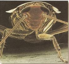 Detalhe das pernas articuladas dos artrópodes