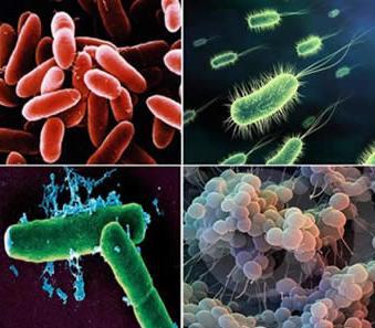 Representação de bactérias