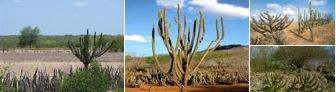 Biomas da Caatinga