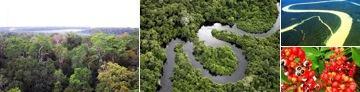 Bioma da floresta amazônica