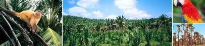 Bioma da Mata dos Cocais