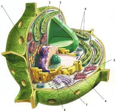 As partes de uma célula vegetal