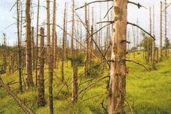 Efeitos da chuva ácida na floresta