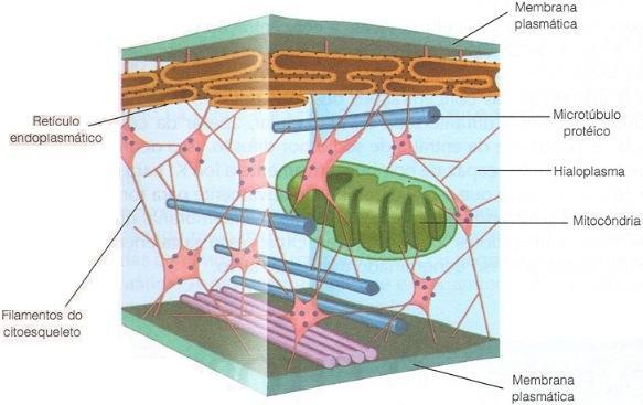 Estruturas do citoplasma