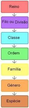 Sistema de classificação biológica