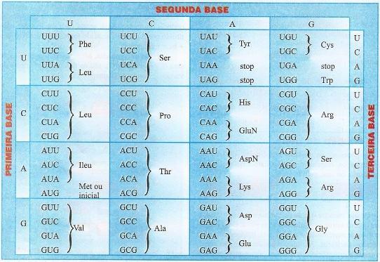 Tabela com o código genético