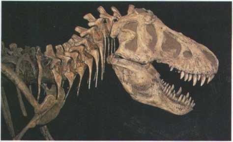 Ossos de dinossauro