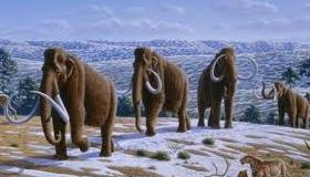 Mamutes da Era Cenozoica