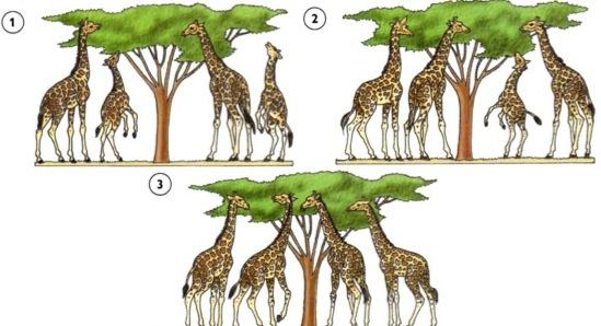 Evolução das espécies segundo Darwin
