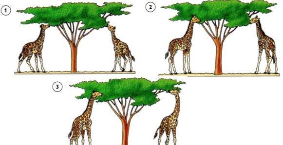 Evolução das espécies segundo Lamarck