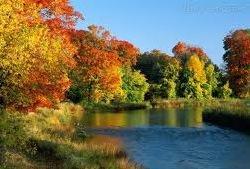 Floresta temperada de Ontário no Canadá