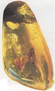 Fóssil de um inseto em um âmbar