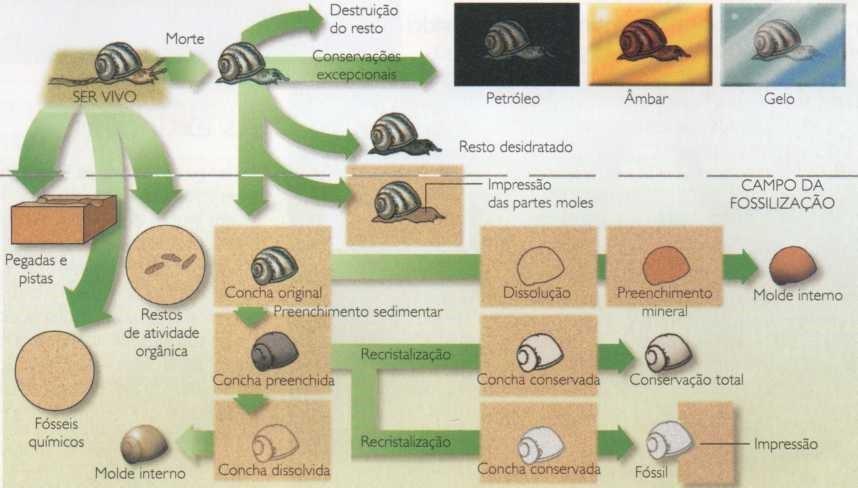 Mecanismos da fossilização